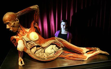A plastinated fetus within a pregnant cadaver at a previous Body Worlds exhibition. (Source: the Telegraph)